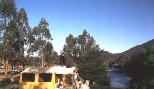 Picture of Blue Gums Caravan Park, Lake Eildon