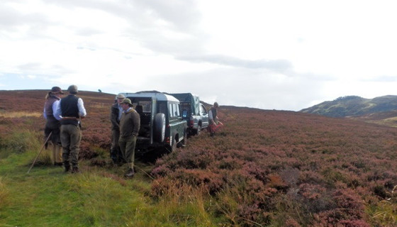 Murthly estate stalking party arrives in Highland Perthshire - The stalking party arrives to a lush patch of Heather in Highland Perthshire
