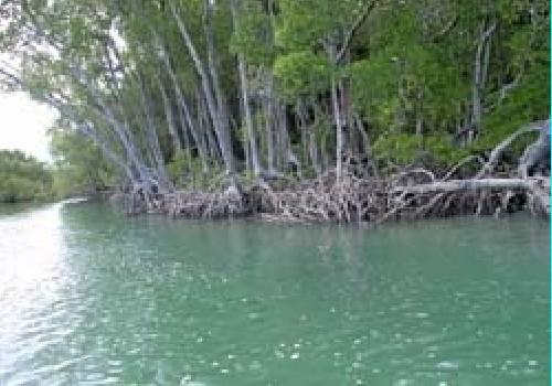 Melville Island Fishing Resort