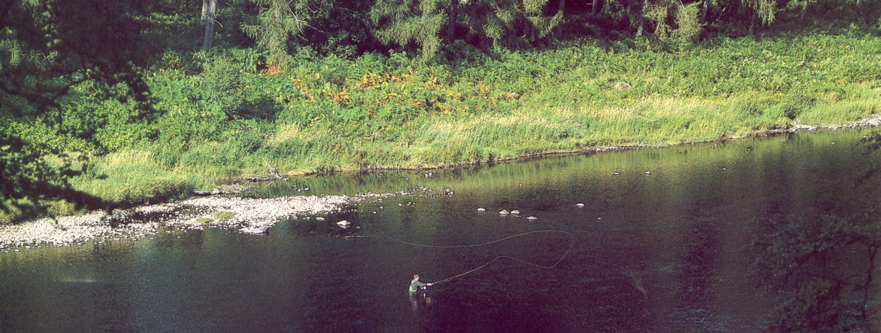 Fly fishing on the River Tay at Murthly estate - Fly fishing is ideal along the River Tay at Murthly Estate in Perthshire