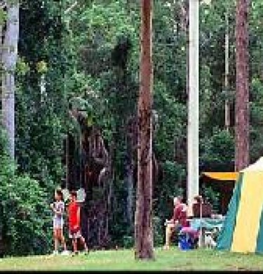Picture of BIG4 Forest Glen Holiday Resort, Sunshine Coast