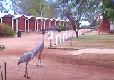 Picture of Gunnadoo Caravan Park, Outback