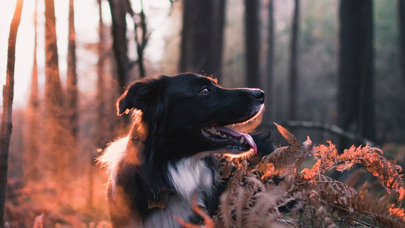 Dog Friendly places in Aviemore - Dog walking in the changing seasons