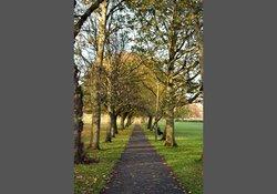 Meadows in Autumn 2