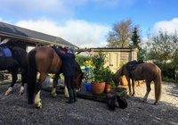horses at the barn 2