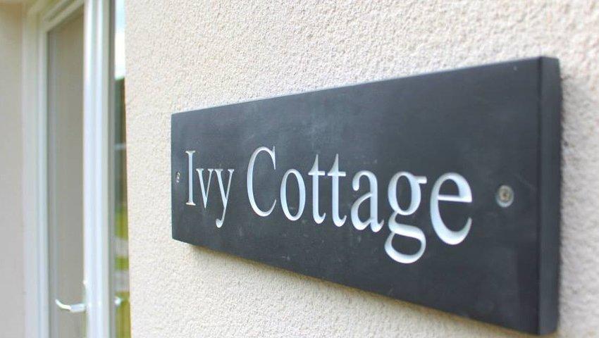 Ivy Sign