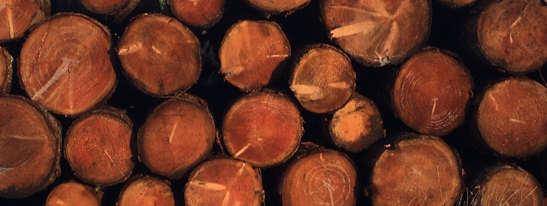 Murthly Sawmill round timber - Top quality softwood for making quality fencing products (© Murthly Estate)