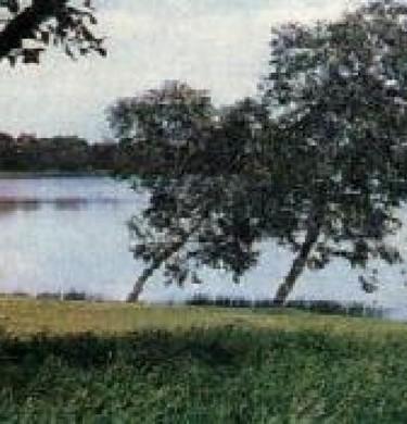 Picture of Lakeview Caravan Park, Gold Coast