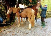horses at the barn 1