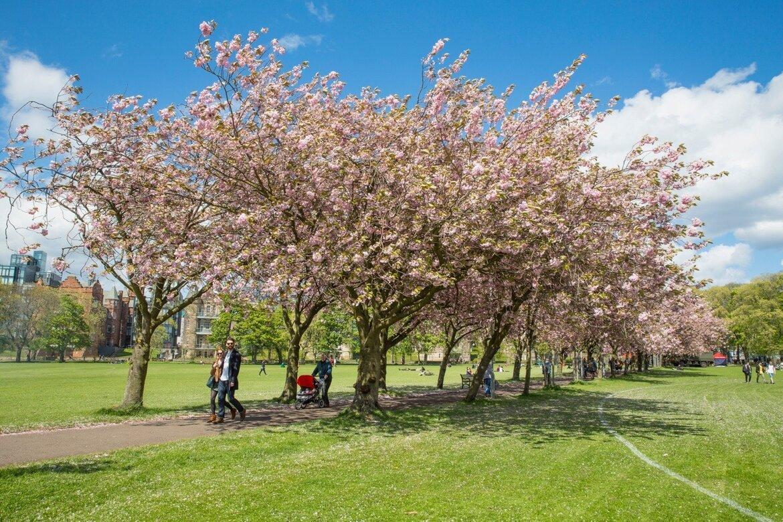 meadows-blossom-13 (© VisitScotland / Kenny Lam)
