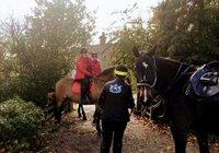 horses at the barn 3