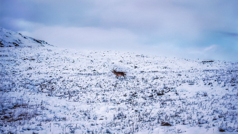 Snowy Scotland (© Photo by K. Mitch Hodge on Unsplash)