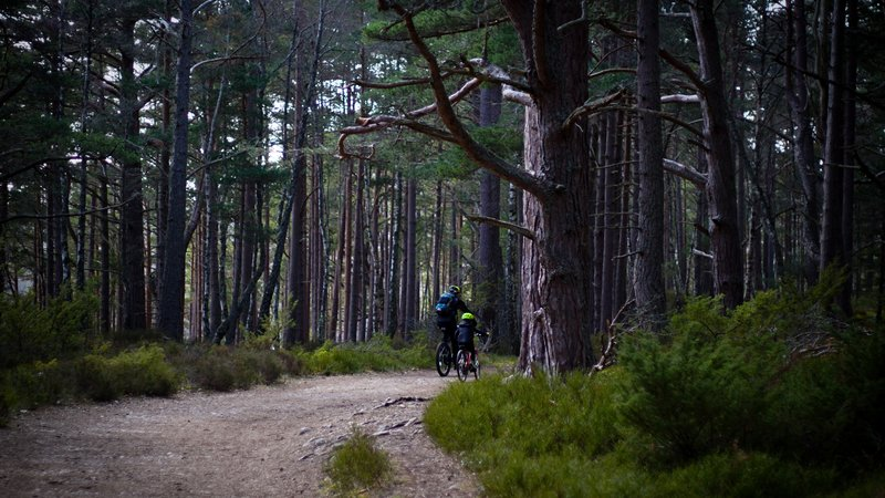 eco friendly holidays - Pine forest