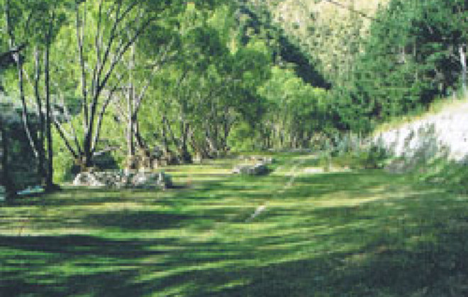 Picture of Dansey's Pass Holiday Park, Otago
