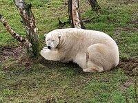 0 Highland Wildlife (Park)