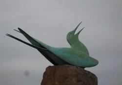 The Seabird Centre's Arctic Tern