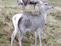 0 Deer O Deer