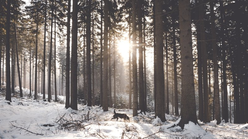 Dog Friendly places in Aviemore - Lots of forest walks