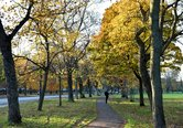 The Meadows in Autumn