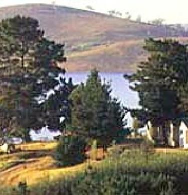 Picture of Rainbow Pines Tourist Caravan Park, Canberra, The Snowy & Sthn