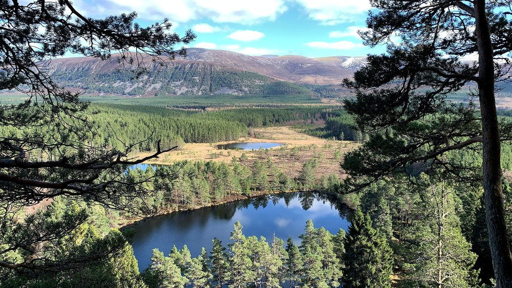 eco friendly holidays - Uath Lochans in the Cairngorms, Highlands of Scotland