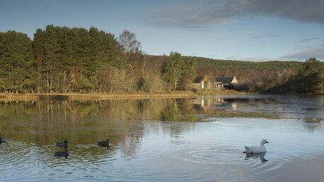 Boat of Garten Duck Pond