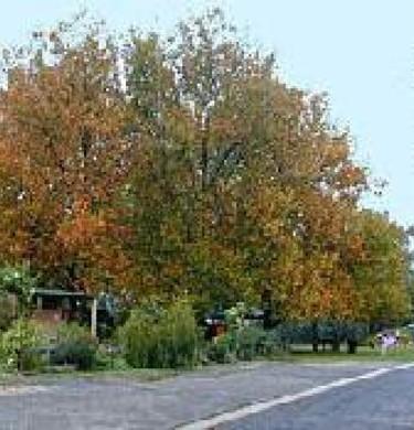 Picture of Yea Family Caravan Park, Lake Eildon