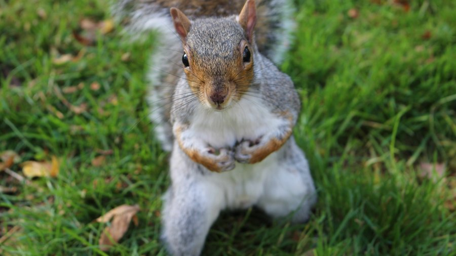 squirrel-3757480_1920
