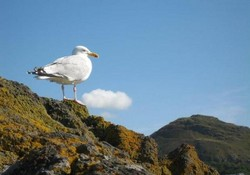 The Law of a Seagull !
