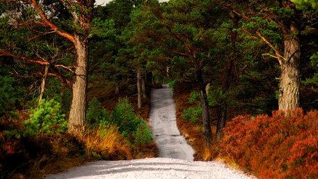 Running routes near Aviemore