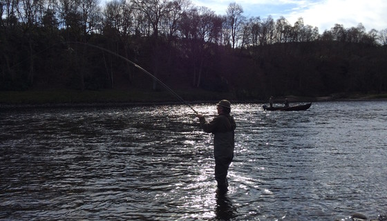 Playing a fish in The Burn - Playing a salmon on the River Tay on Murthly Beat 1 Beat 2 in the low spring sunshine (© Murthly Estate)